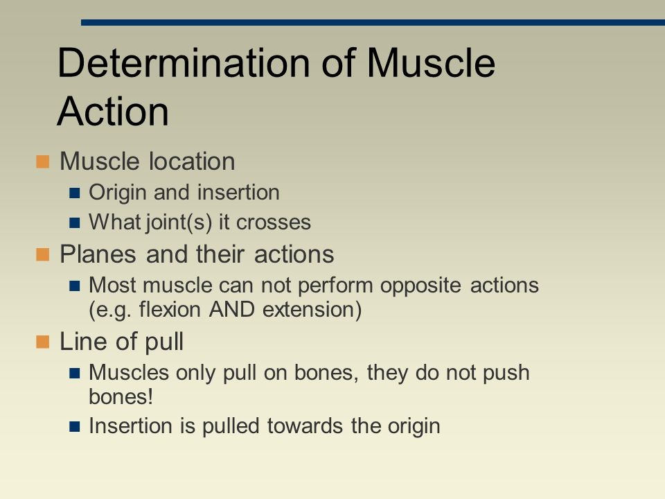 Determination of Muscle Action Muscle location Origin and insertion What joint(s) it crosses Planes and their actions Most muscle can not perform oppo