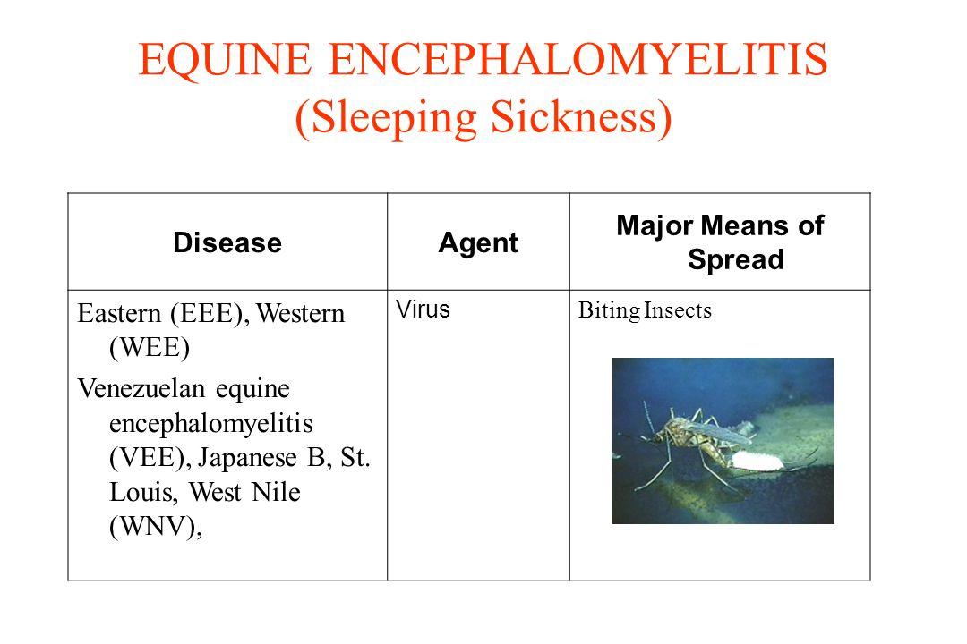 EQUINE ENCEPHALOMYELITIS (Sleeping Sickness) DiseaseAgent Major Means of Spread Eastern (EEE), Western (WEE) Venezuelan equine encephalomyelitis (VEE)