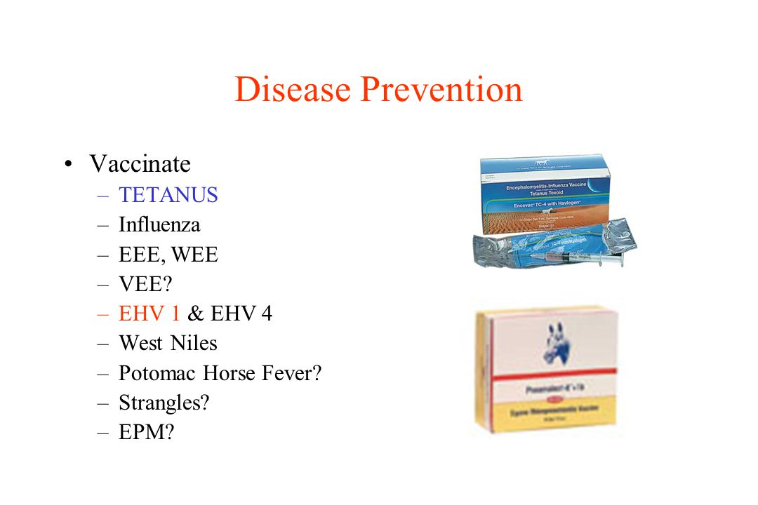 Disease Prevention Vaccinate –TETANUS –Influenza –EEE, WEE –VEE? –EHV 1 & EHV 4 –West Niles –Potomac Horse Fever? –Strangles? –EPM?