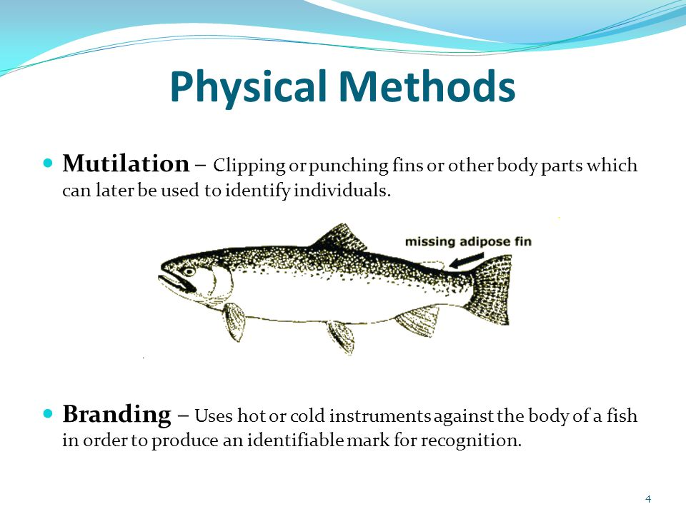 Physical Methods Mutilation – Clipping or punching fins or other body parts which can later be used to identify individuals. Branding – Uses hot or co