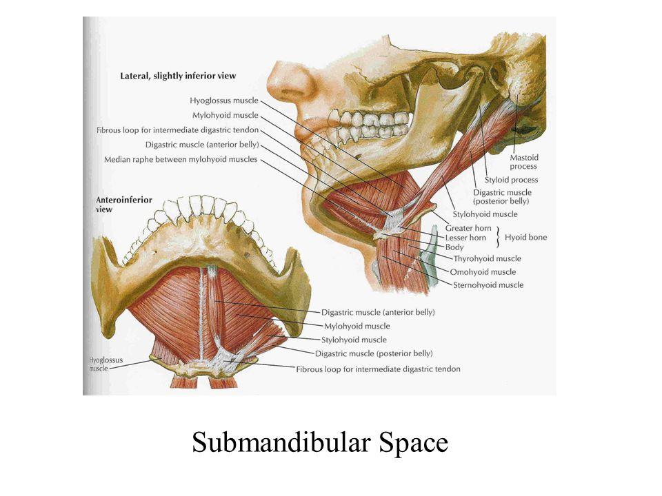 Submandibular Space