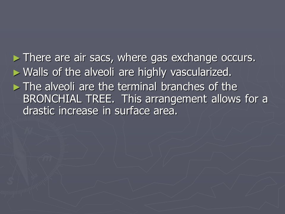► There are air sacs, where gas exchange occurs. ► Walls of the alveoli are highly vascularized. ► The alveoli are the terminal branches of the BRONCH