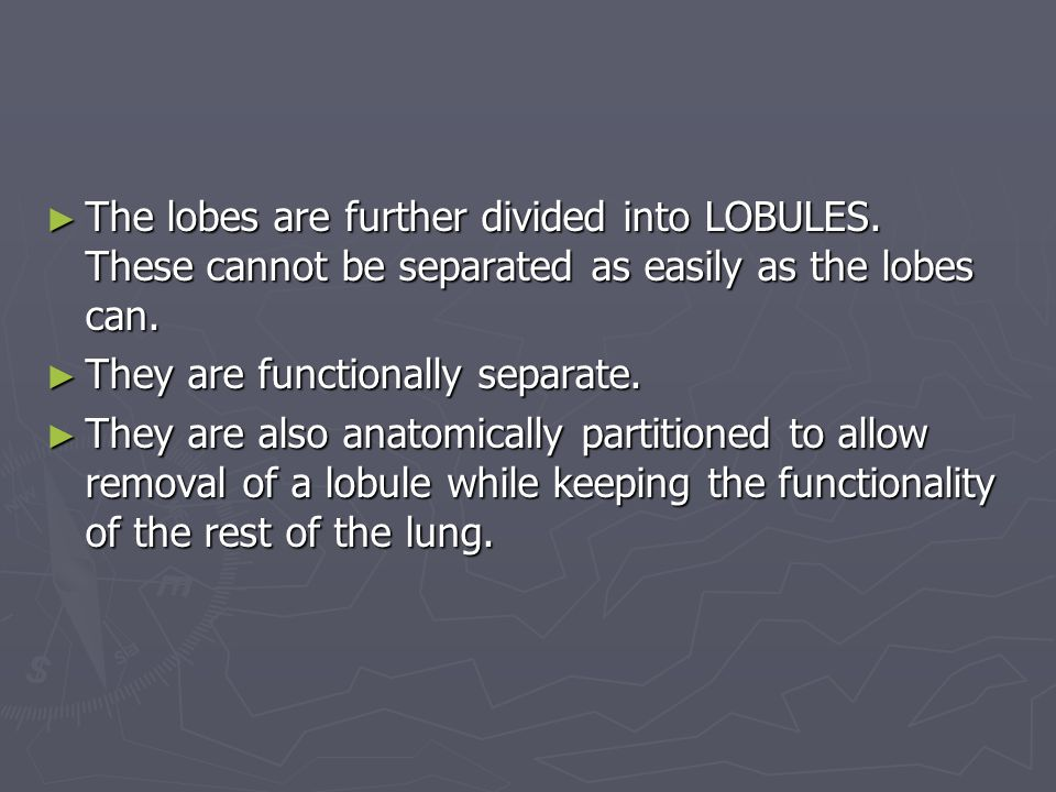 ► The lobes are further divided into LOBULES.These cannot be separated as easily as the lobes can.