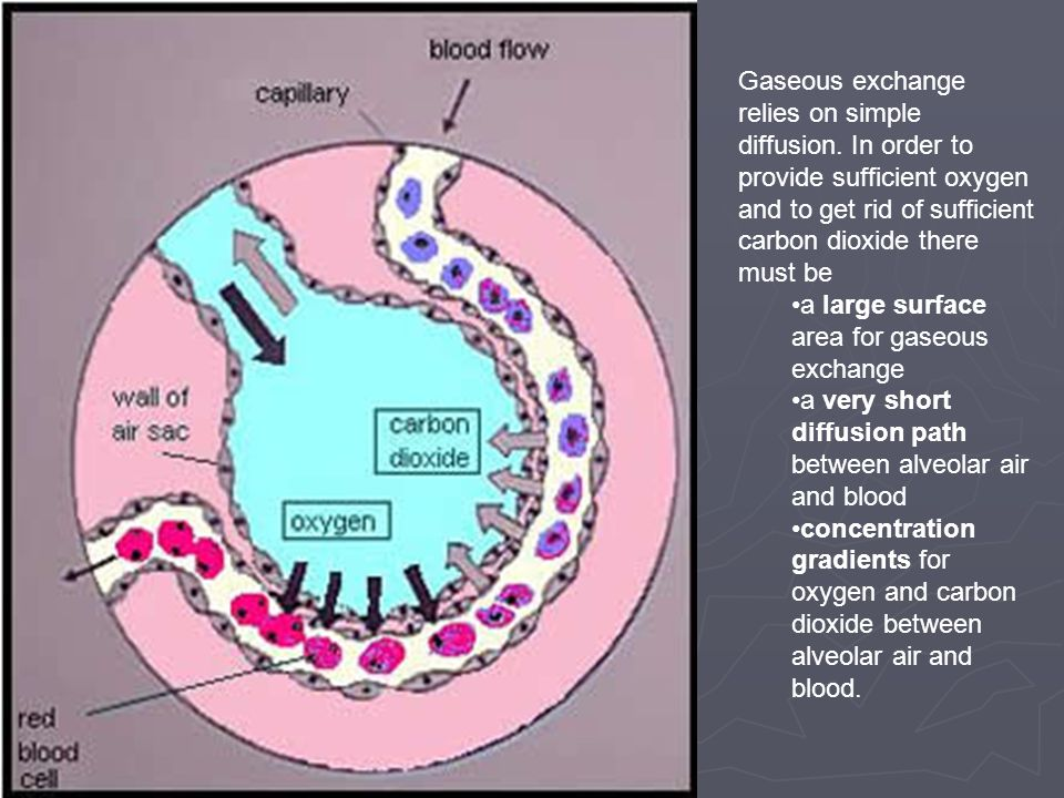 Gaseous exchange relies on simple diffusion. In order to provide sufficient oxygen and to get rid of sufficient carbon dioxide there must be a large s