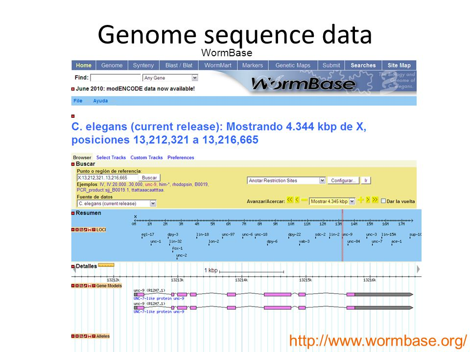 Genome sequence data WormBase http://www.wormbase.org/