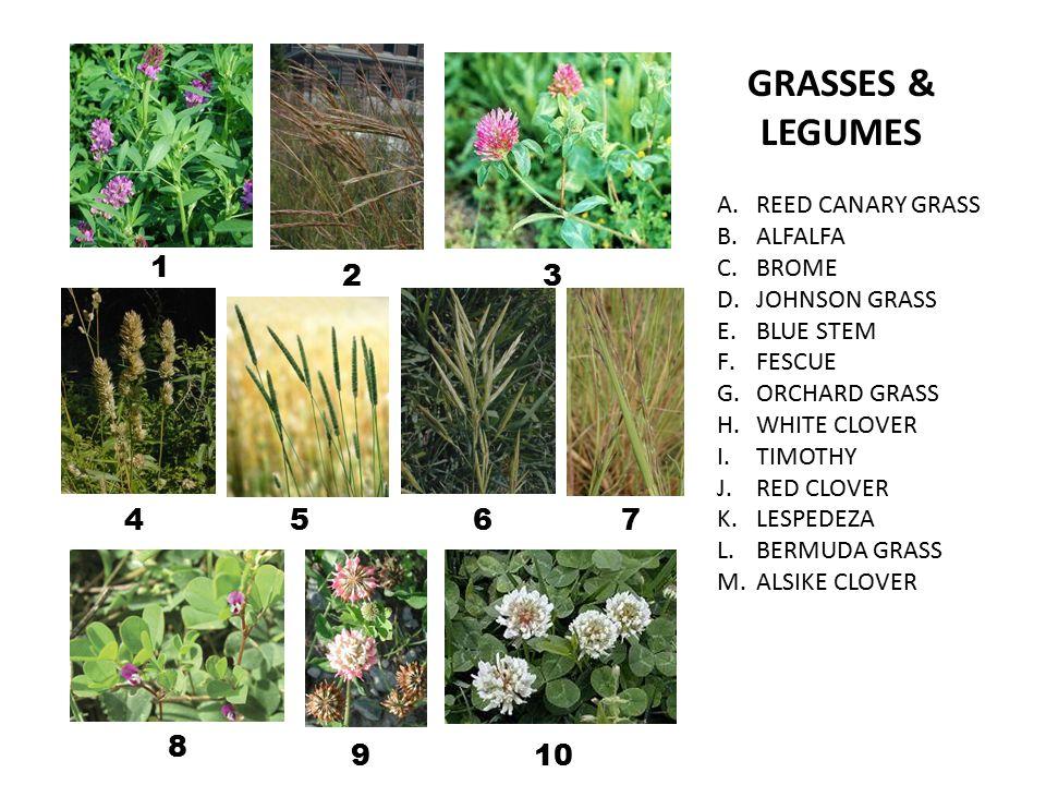 A.REED CANARY GRASS B.ALFALFA C.BROME D.JOHNSON GRASS E.BLUE STEM F.FESCUE G.ORCHARD GRASS H.WHITE CLOVER I.TIMOTHY J.RED CLOVER K.LESPEDEZA L.BERMUDA GRASS M.ALSIKE CLOVER GRASSES & LEGUMES 1 23 4567 8 910