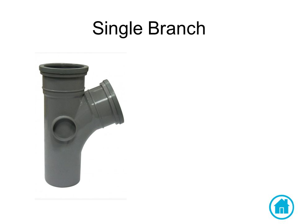 Single Branch