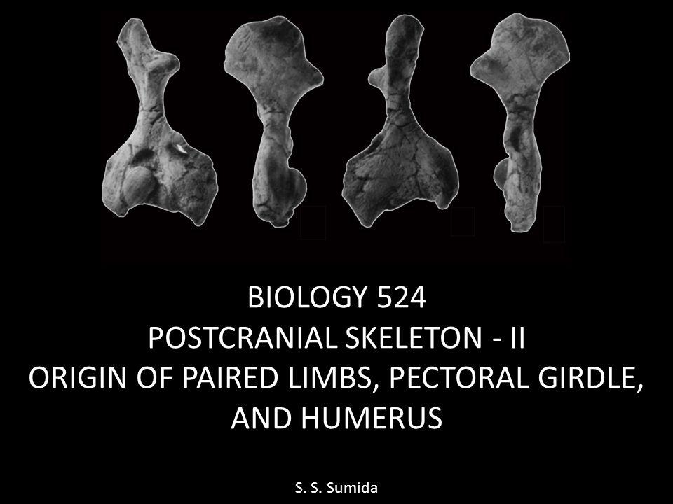 BIOLOGY 524 POSTCRANIAL SKELETON - II ORIGIN OF PAIRED LIMBS, PECTORAL GIRDLE, AND HUMERUS S. S. Sumida