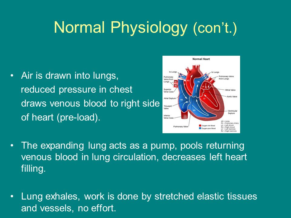 Normal Physiology (con't.) Air is drawn into lungs, reduced pressure in chest draws venous blood to right side of heart (pre-load).