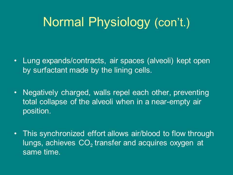 Normal Physiology (con't.) Lung expands/contracts, air spaces (alveoli) kept open by surfactant made by the lining cells.