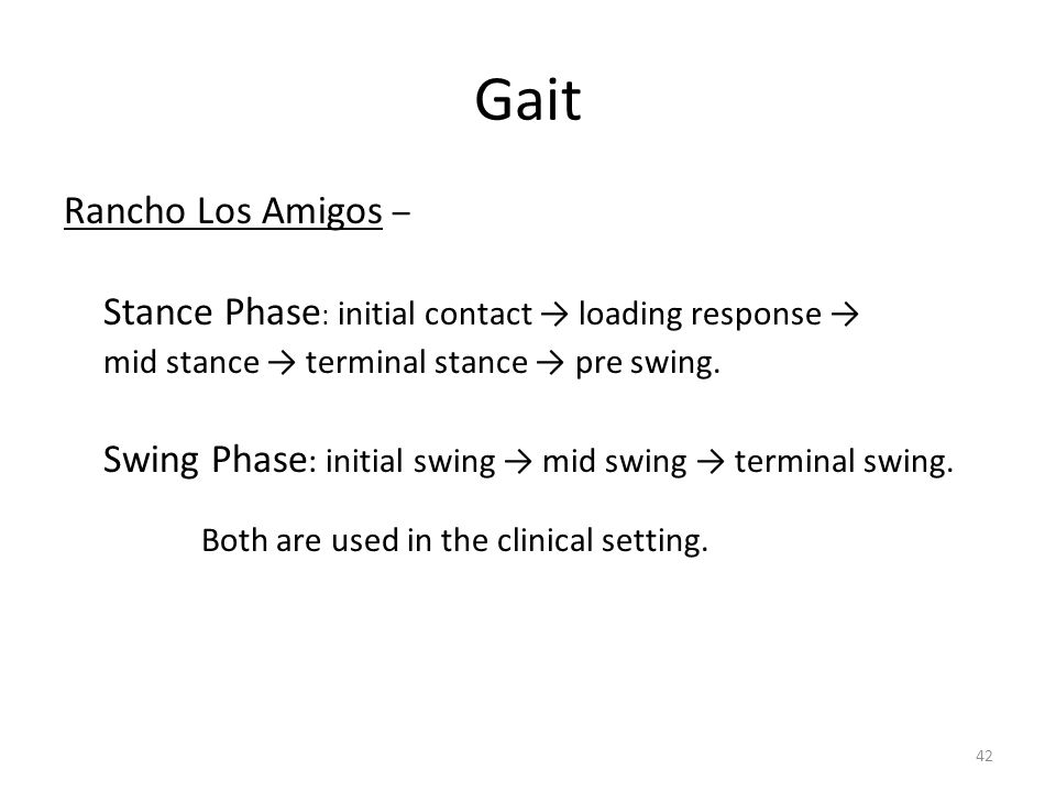 Gait Rancho Los Amigos – Stance Phase : initial contact → loading response → mid stance → terminal stance → pre swing.