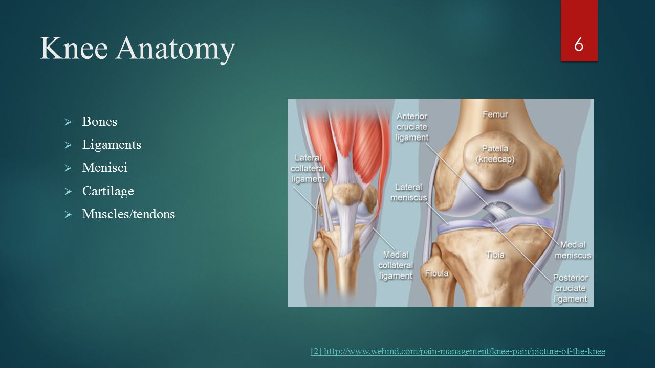 Knee Anatomy  Bones  Ligaments  Menisci  Cartilage  Muscles/tendons 6 [2] http://www.webmd.com/pain-management/knee-pain/picture-of-the-knee