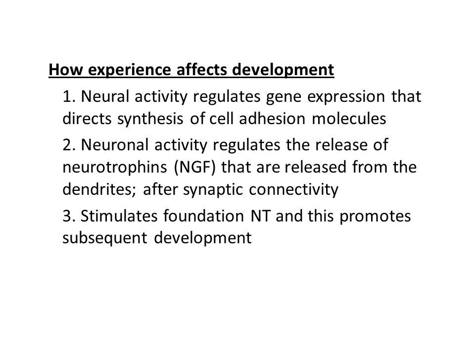 How experience affects development 1. Neural activity regulates gene expression that directs synthesis of cell adhesion molecules 2. Neuronal activity