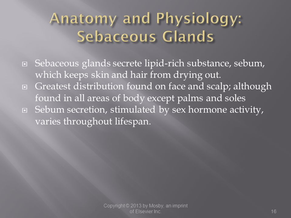  Sebaceous glands secrete lipid-rich substance, sebum, which keeps skin and hair from drying out.  Greatest distribution found on face and scalp; al