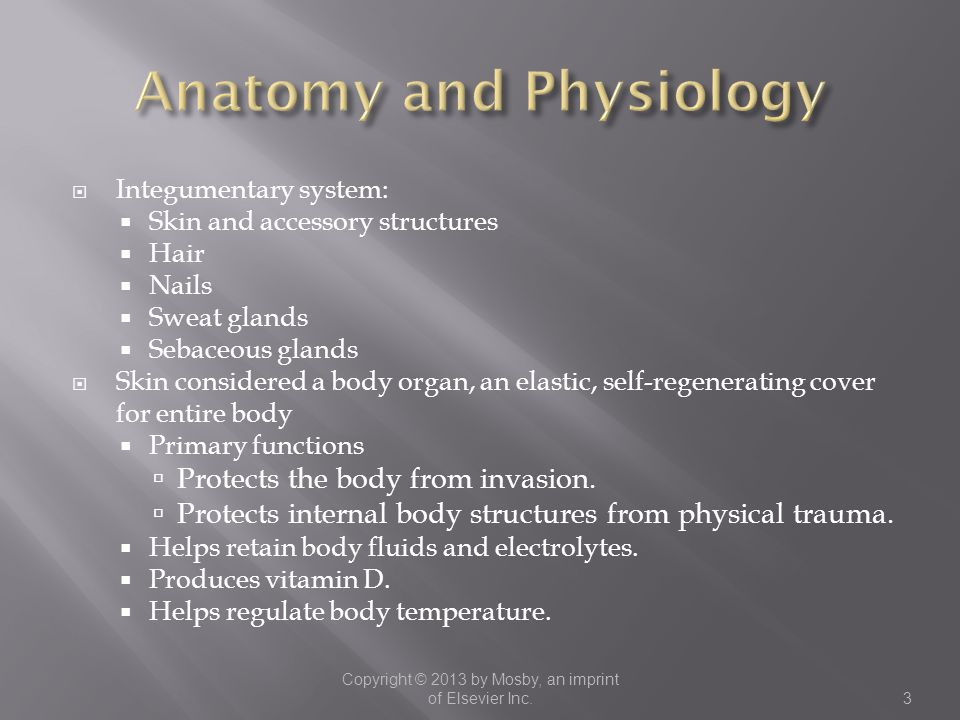  Integumentary system:  Skin and accessory structures  Hair  Nails  Sweat glands  Sebaceous glands  Skin considered a body organ, an elastic, s