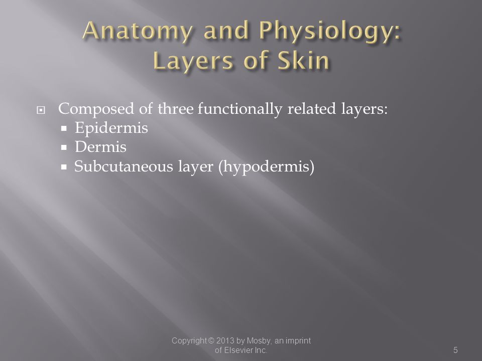  Composed of three functionally related layers:  Epidermis  Dermis  Subcutaneous layer (hypodermis) Copyright © 2013 by Mosby, an imprint of Elsev