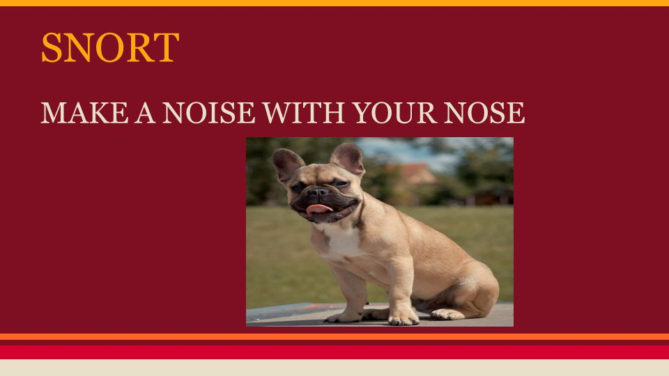 SNORT MAKE A NOISE WITH YOUR NOSE