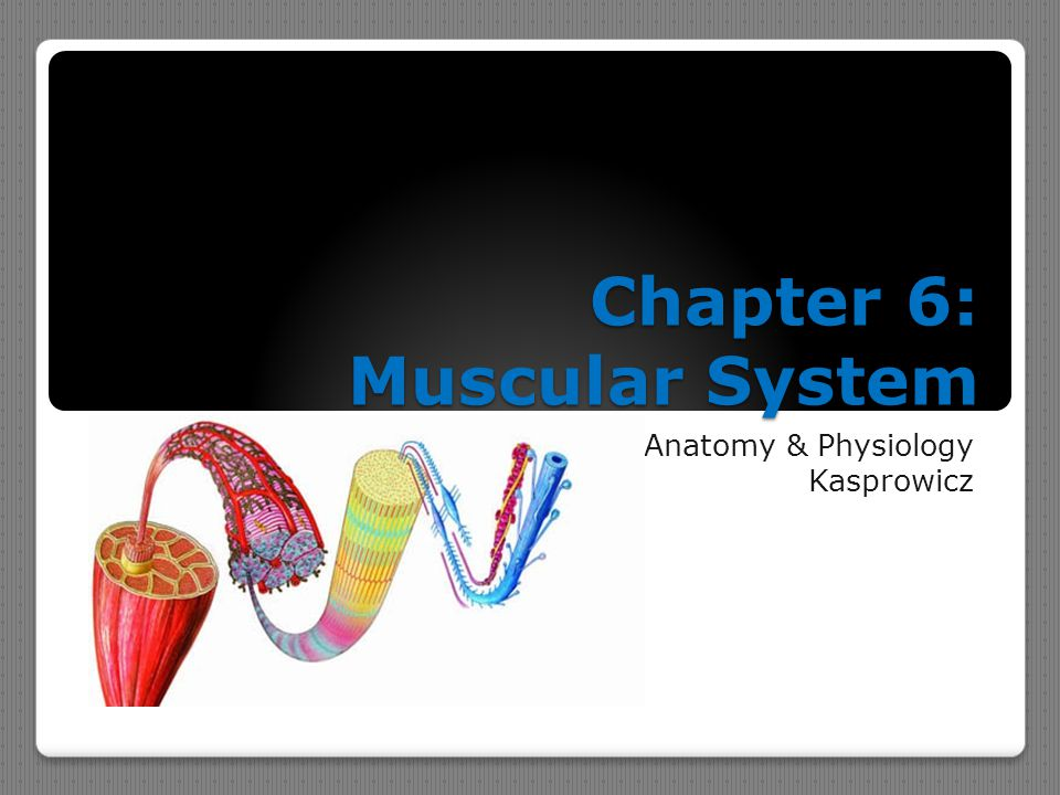 Chapter 6: Muscular System Anatomy & Physiology Kasprowicz