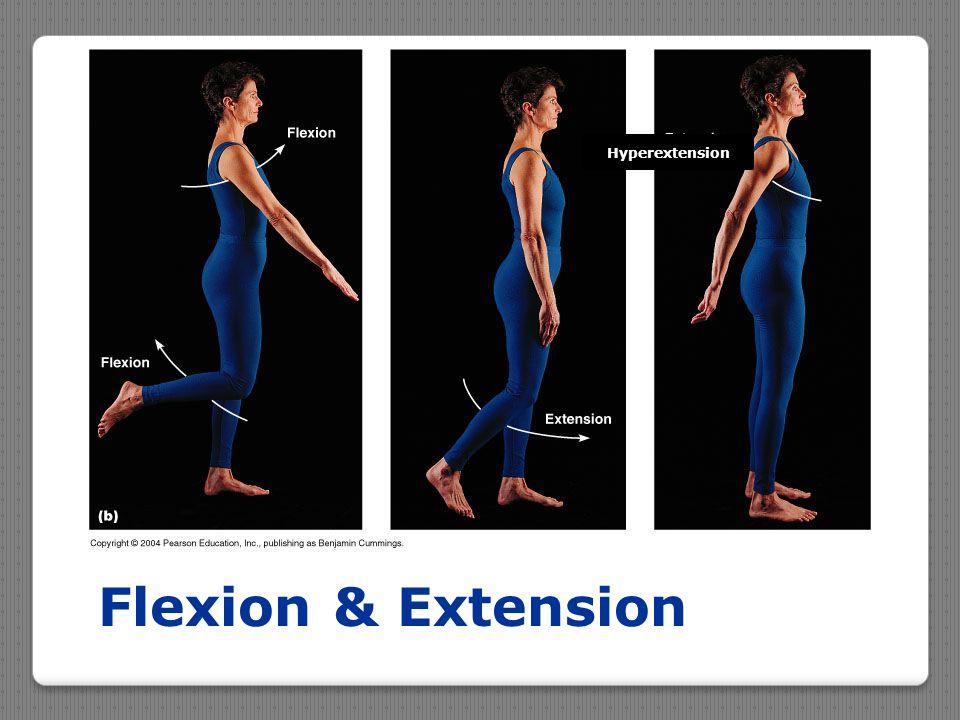 Flexion & Extension Hyperextension