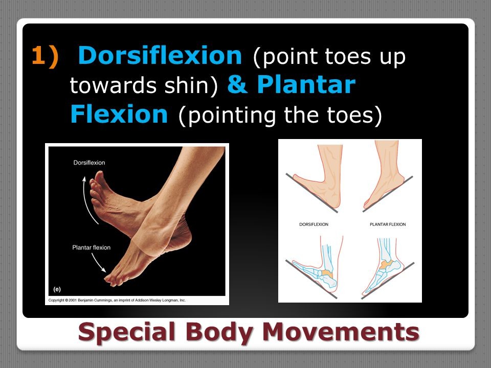 Special Body Movements 1) Dorsiflexion (point toes up towards shin) & Plantar Flexion (pointing the toes)