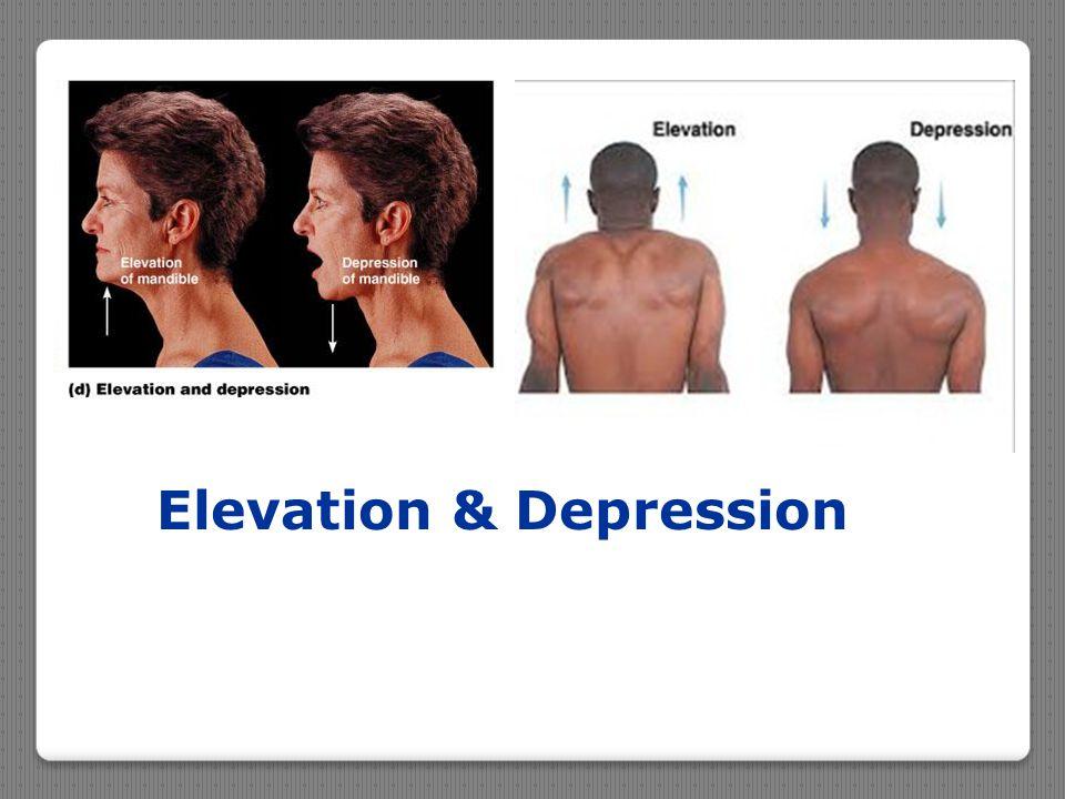 Elevation & Depression