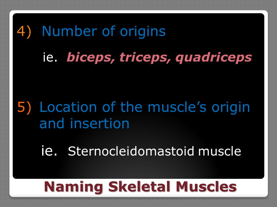 Naming Skeletal Muscles 4) Number of origins ie. biceps, triceps, quadriceps 5)Location of the muscle's origin and insertion ie. Sternocleidomastoid m