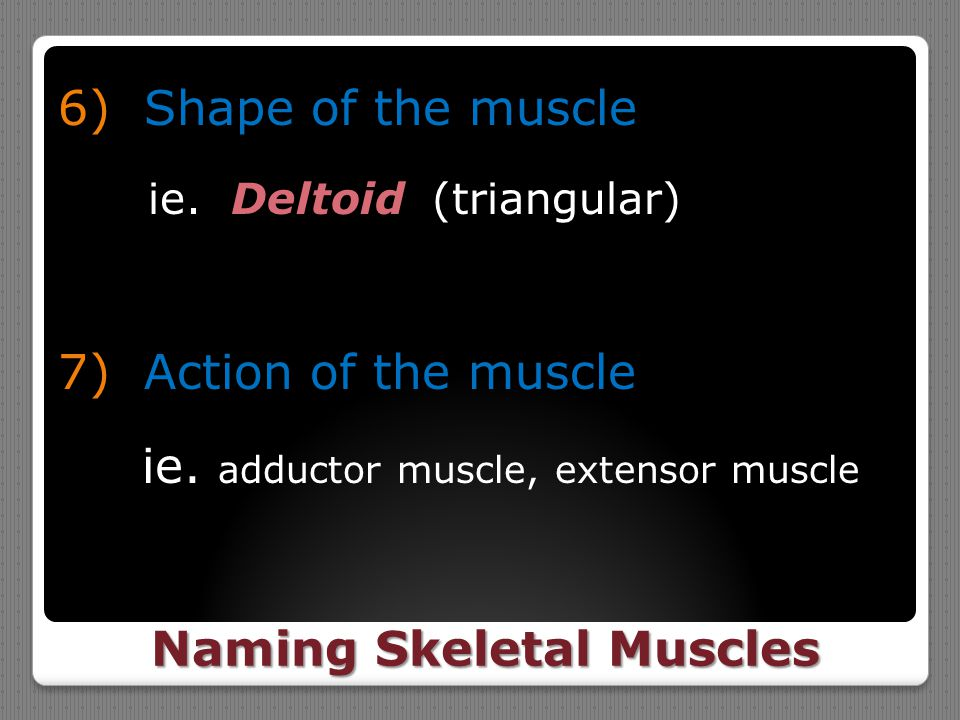 Naming Skeletal Muscles 6) Shape of the muscle ie. Deltoid (triangular) 7) Action of the muscle ie. adductor muscle, extensor muscle