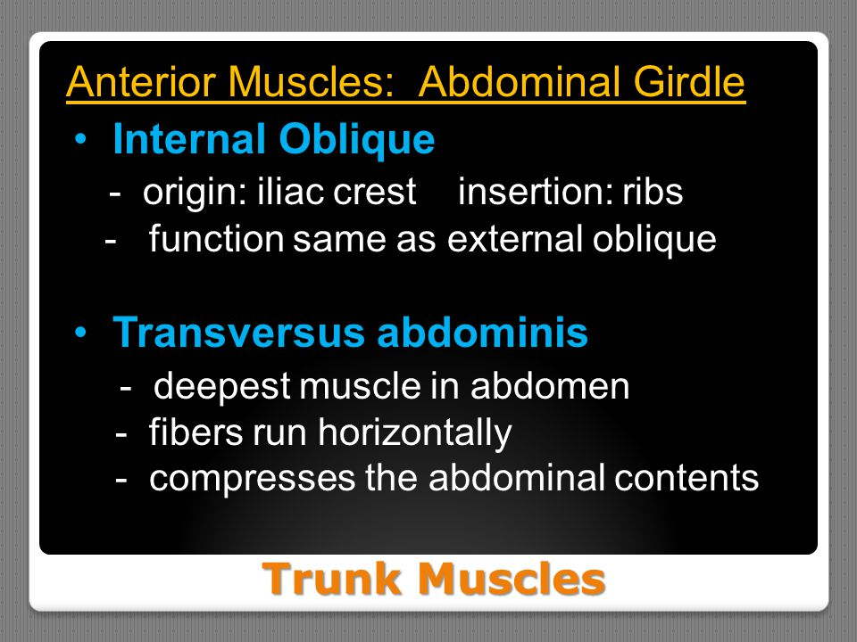Trunk Muscles Anterior Muscles: Abdominal Girdle Internal Oblique - origin: iliac crest insertion: ribs - function same as external oblique Transversu