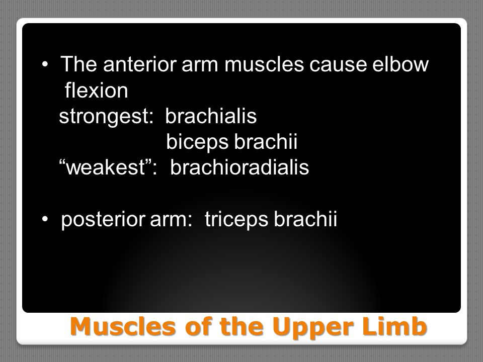 "Muscles of the Upper Limb Muscles of the Upper Limb The anterior arm muscles cause elbow flexion strongest: brachialis biceps brachii ""weakest"": brach"