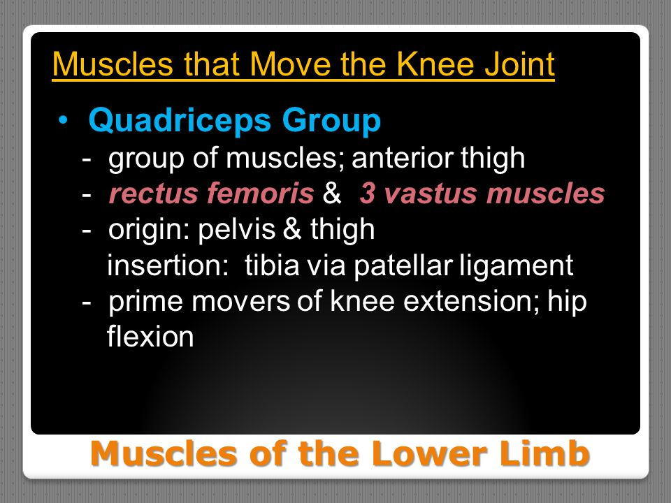 Muscles of the Lower Limb Muscles that Move the Knee Joint Quadriceps Group - group of muscles; anterior thigh - rectus femoris & 3 vastus muscles - o
