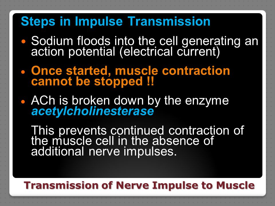 Transmission of Nerve Impulse to Muscle Steps in Impulse Transmission Sodium floods into the cell generating an action potential (electrical current)