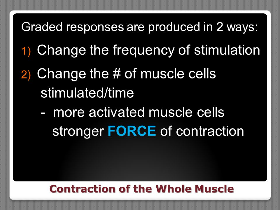 Contraction of the Whole Muscle Graded responses are produced in 2 ways: 1) Change the frequency of stimulation 2) Change the # of muscle cells stimul