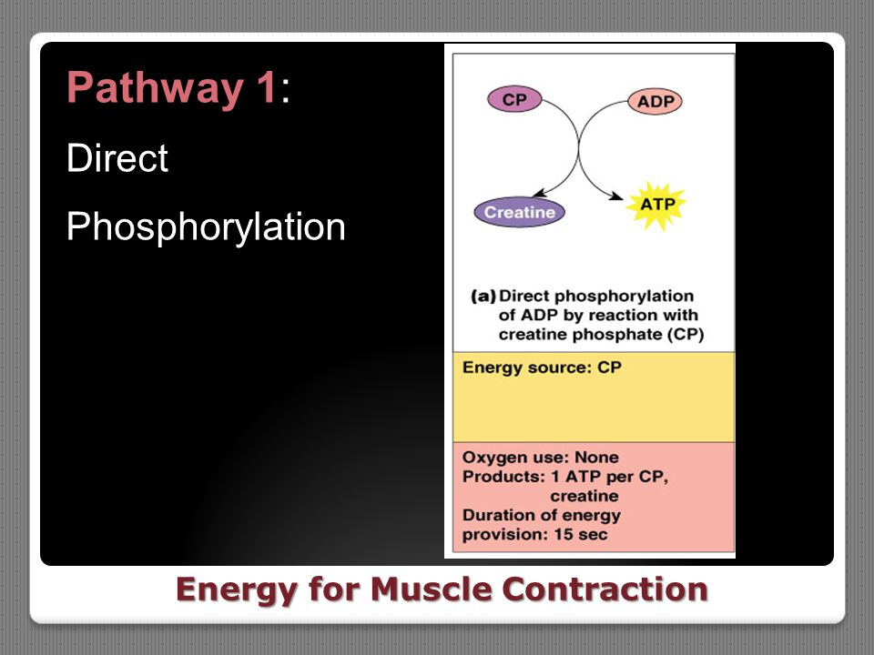 Energy for Muscle Contraction Pathway 1: Direct Phosphorylation
