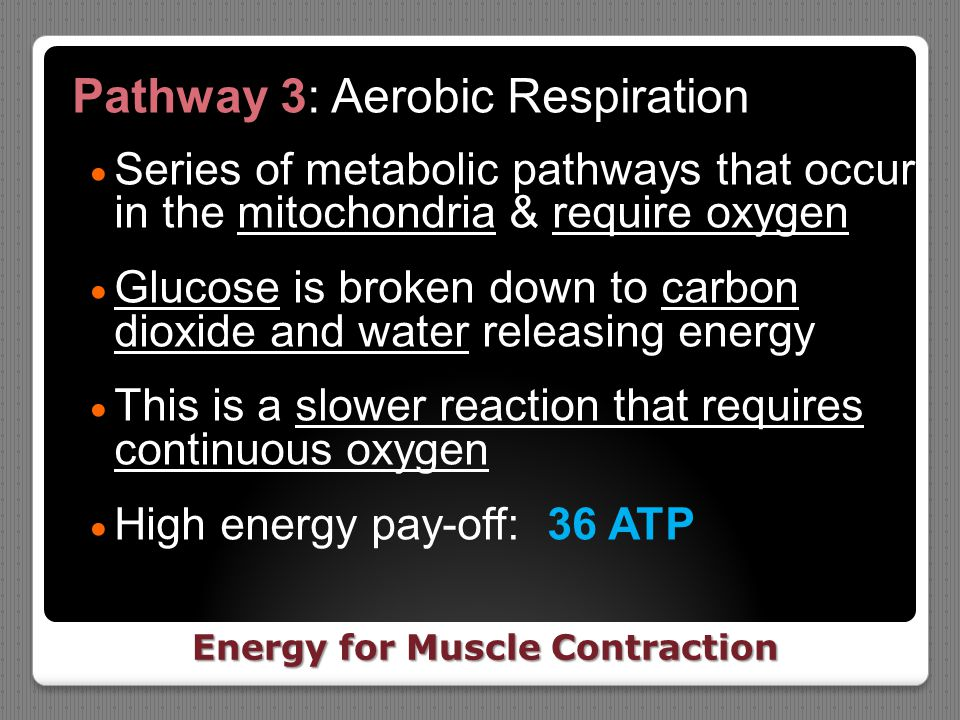 Energy for Muscle Contraction Pathway 3: Aerobic Respiration  Series of metabolic pathways that occur in the mitochondria & require oxygen  Glucose