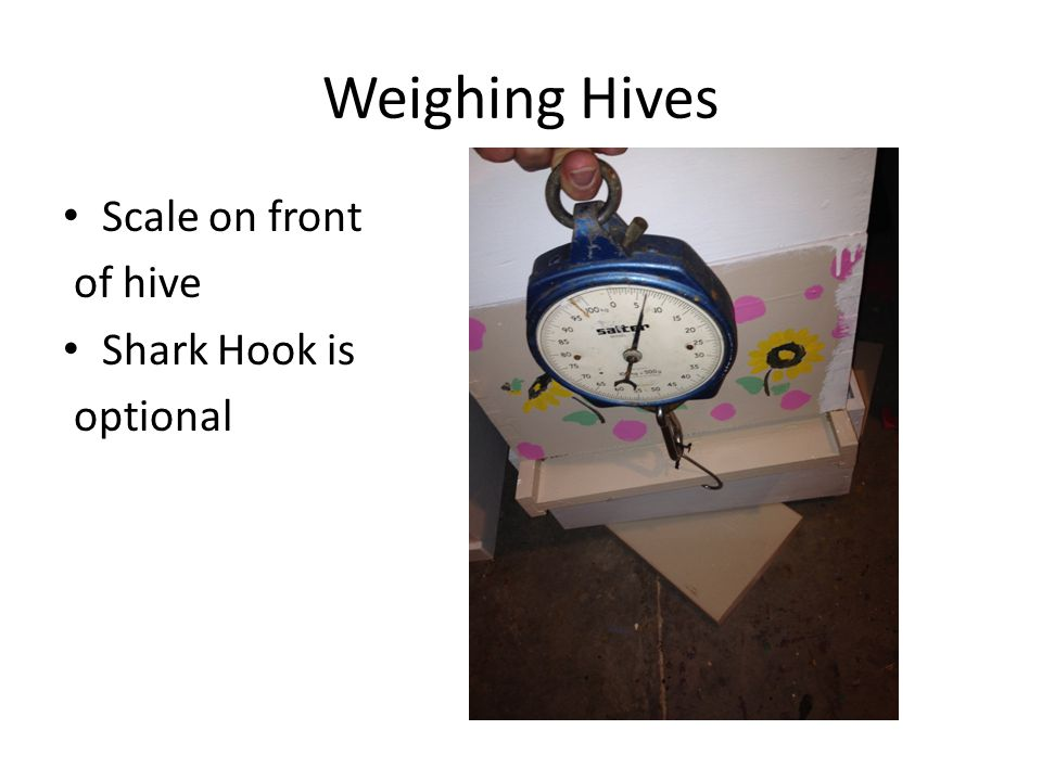 Weighing Hives Scale on front of hive Shark Hook is optional