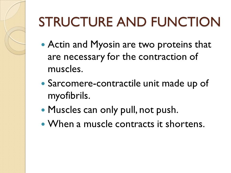 STRUCTURE AND FUNCTION Actin and Myosin are two proteins that are necessary for the contraction of muscles. Sarcomere-contractile unit made up of myof