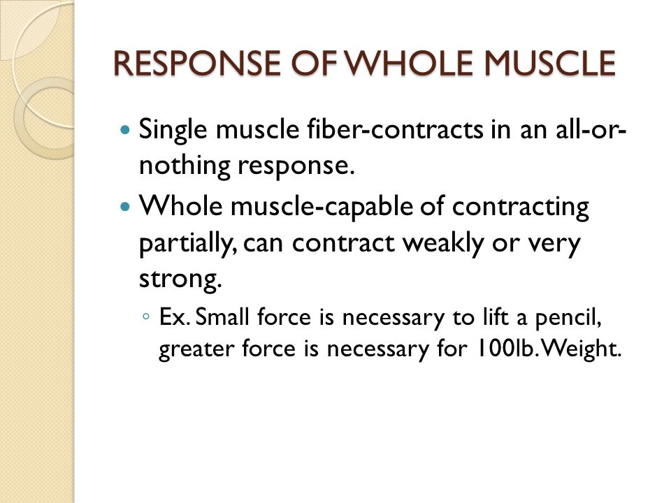 RESPONSE OF WHOLE MUSCLE Single muscle fiber-contracts in an all-or- nothing response. Whole muscle-capable of contracting partially, can contract wea