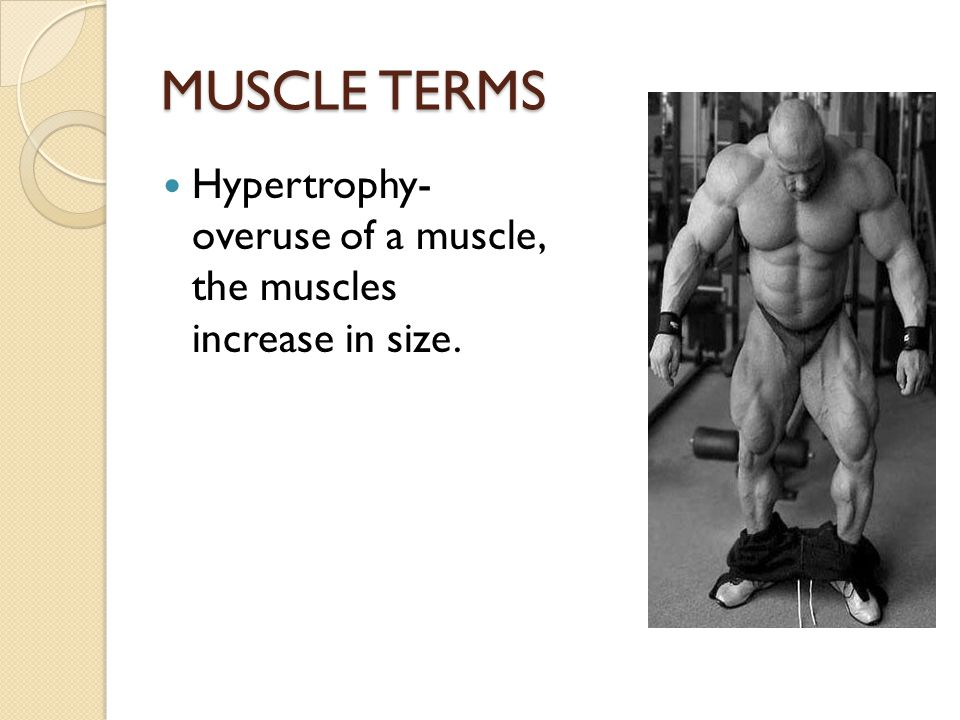 MUSCLE TERMS Hypertrophy- overuse of a muscle, the muscles increase in size.
