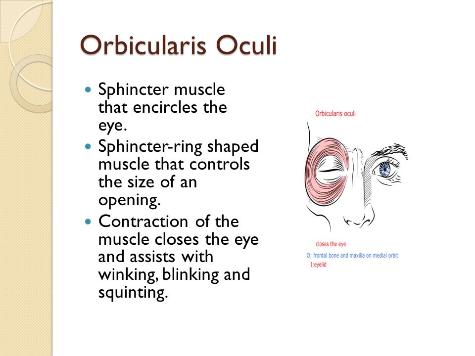 Orbicularis Oculi Sphincter muscle that encircles the eye. Sphincter-ring shaped muscle that controls the size of an opening. Contraction of the muscl