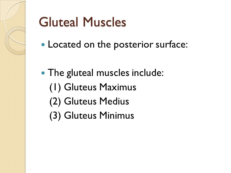 Gluteal Muscles Located on the posterior surface: The gluteal muscles include: (1) Gluteus Maximus (2) Gluteus Medius (3) Gluteus Minimus