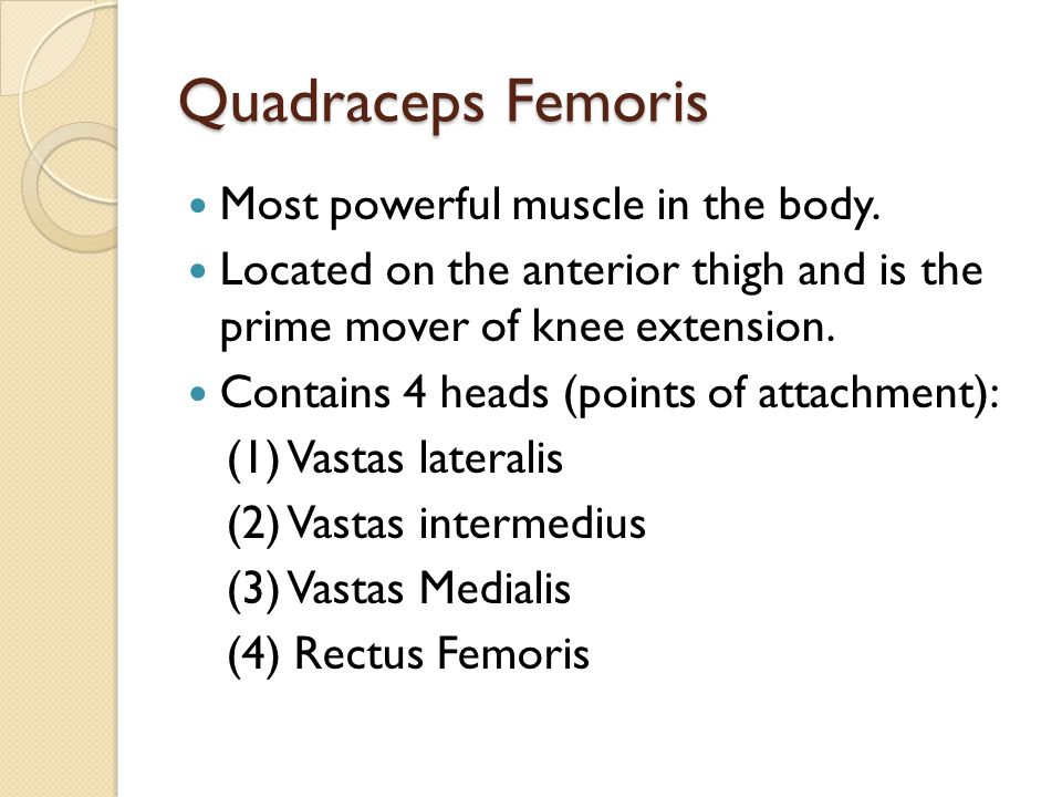 Quadraceps Femoris Most powerful muscle in the body. Located on the anterior thigh and is the prime mover of knee extension. Contains 4 heads (points