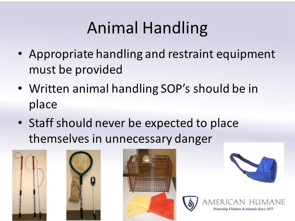 Animal Handling Appropriate handling and restraint equipment must be provided Written animal handling SOP's should be in place Staff should never be expected to place themselves in unnecessary danger