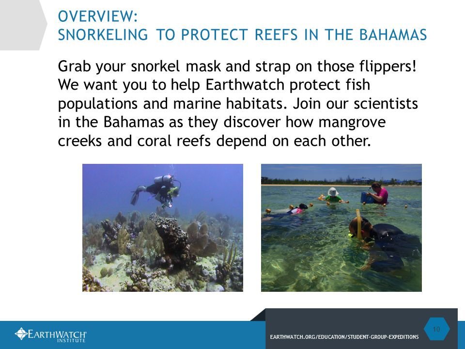 EARTHWATCH.ORG/EDUCATION/STUDENT-GROUP-EXPEDITIONS OVERVIEW: SNORKELING TO PROTECT REEFS IN THE BAHAMAS Grab your snorkel mask and strap on those flippers.