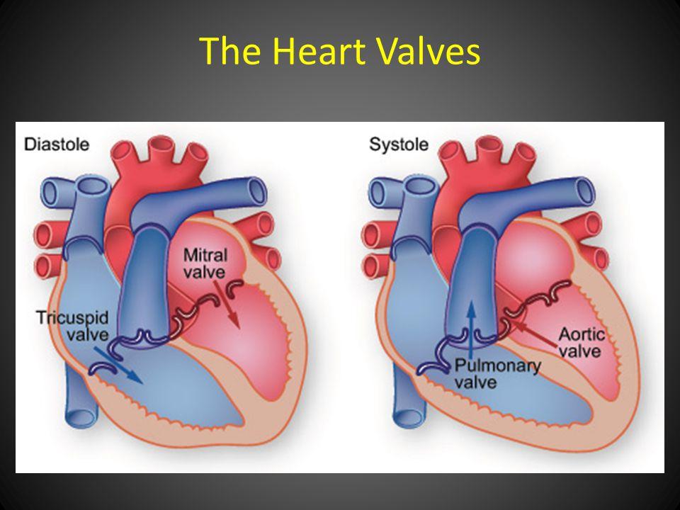 The Heart Valves