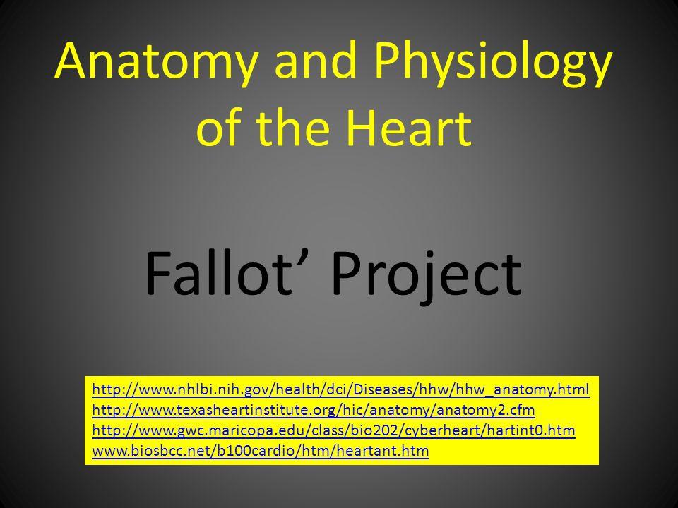 Anatomy and Physiology of the Heart Fallot' Project http://www.nhlbi.nih.gov/health/dci/Diseases/hhw/hhw_anatomy.html http://www.texasheartinstitute.org/hic/anatomy/anatomy2.cfm http://www.gwc.maricopa.edu/class/bio202/cyberheart/hartint0.htm www.biosbcc.net/b100cardio/htm/heartant.htm
