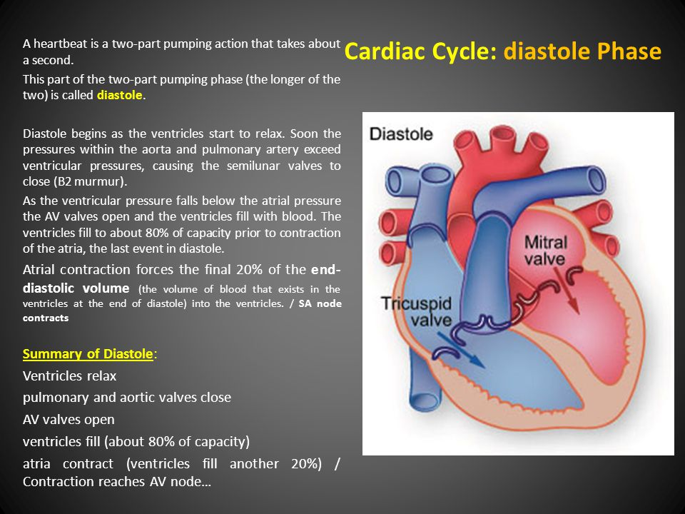 Cardiac Cycle: diastole Phase A heartbeat is a two-part pumping action that takes about a second.