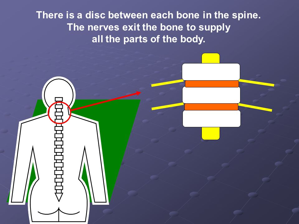 There is a disc between each bone in the spine.