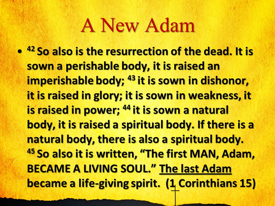 A New Adam 46 However, the spiritual is not first, but the natural; then the spiritual.