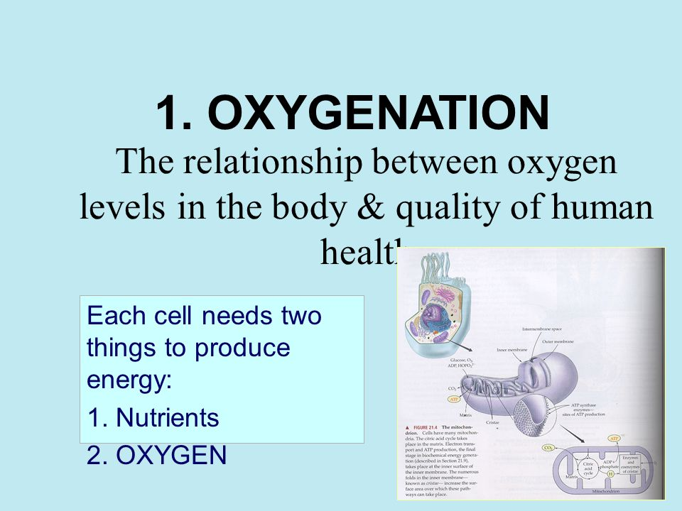 The relationship between oxygen levels in the body & quality of human health Each cell needs two things to produce energy: 1.