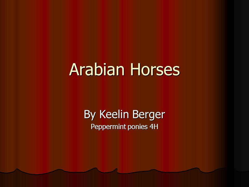 Arabian Horses By Keelin Berger Peppermint ponies 4H